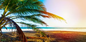guadeloupe 300x147 - Palm Tree In Grande Anse Beach In Guadeloupe, French West Indies